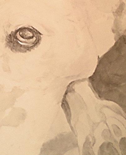 Mystery Portrait; shading begun