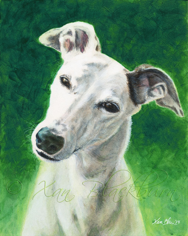 Katie greyhound portrait