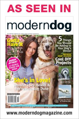 Modern Dog cover