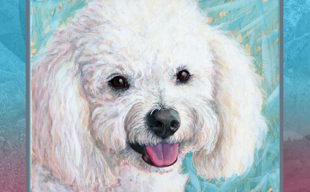 Alfie bichon portrait
