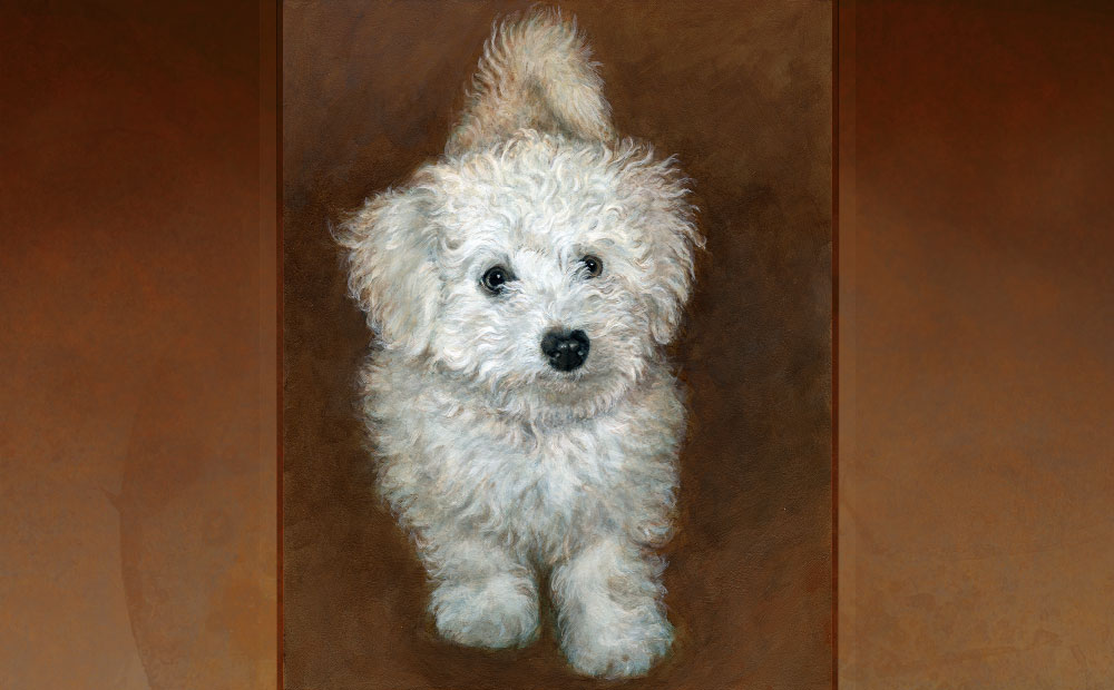 Fluffy bichon portrait