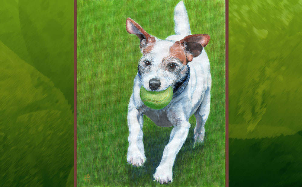 Jilly Bean terrier portrait