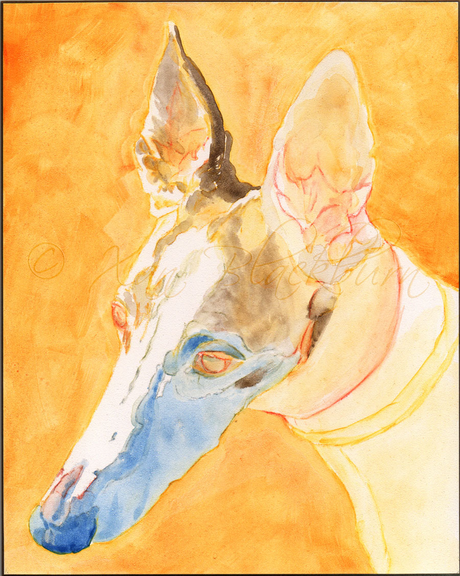 PM – Luki (greyhound portrait)