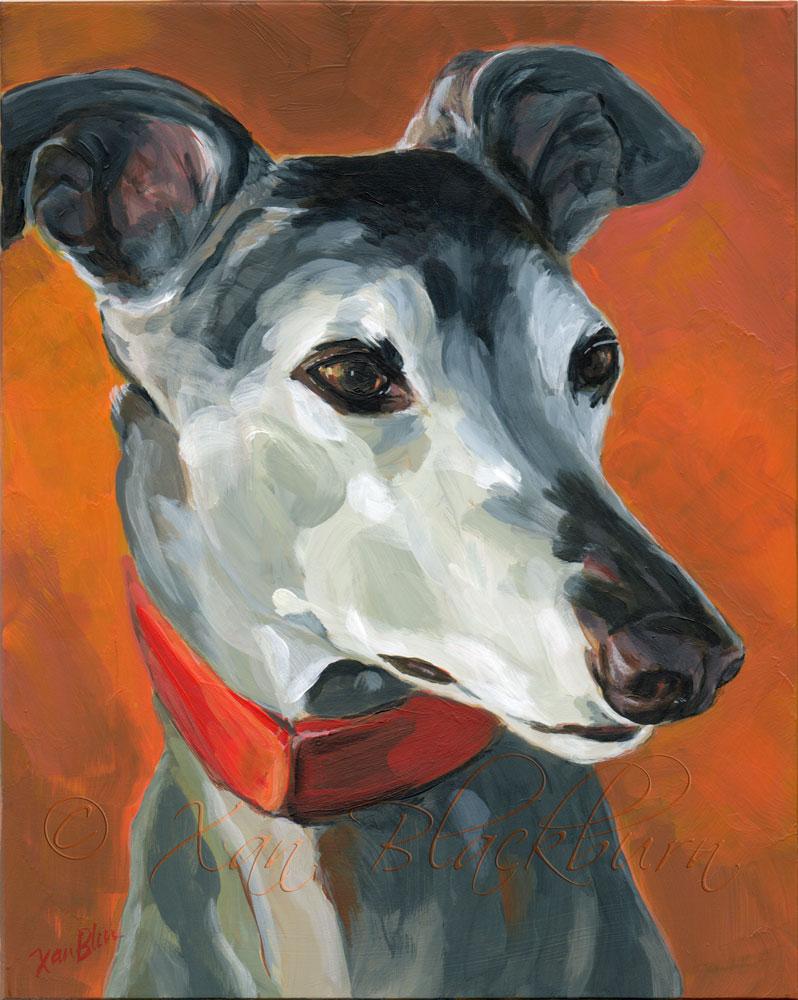 Sadie greyhound portrait