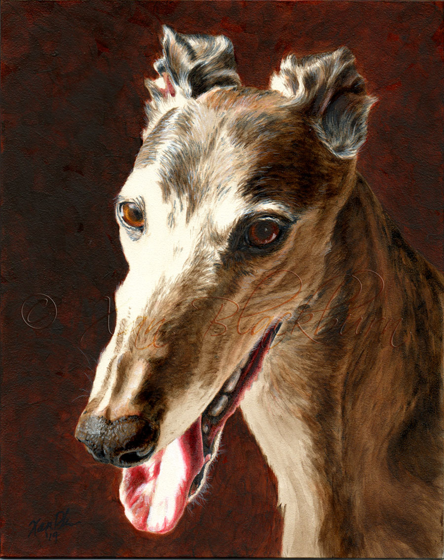 Stella greyhound portrait