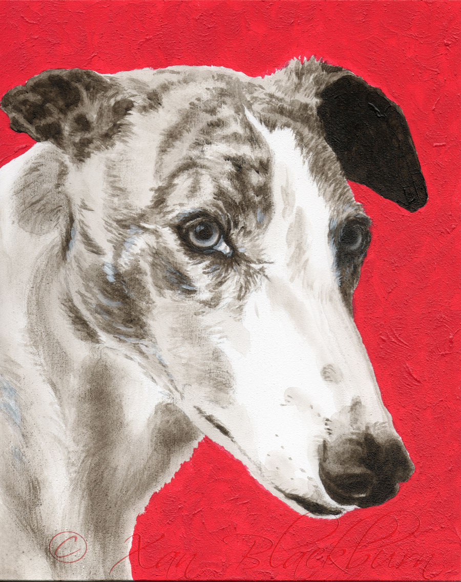 # 11 in the Portrait Marathon, Bo the greyhound